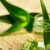 Aloe Vera Bitkisinin Faydaları